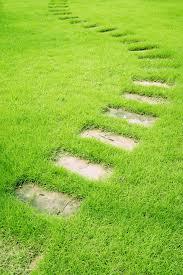 escaleier vert