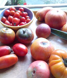 Les tomates du jardin Sept 2013